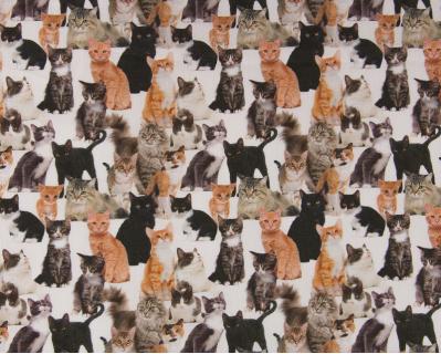 Estampado Gatos Sendai 1